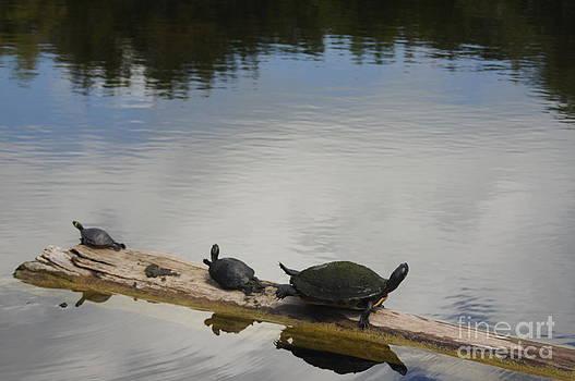 Turtles on a Log by Nicholas Pena