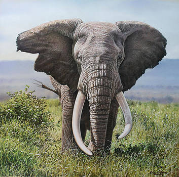 Tusker by Eric Wilson
