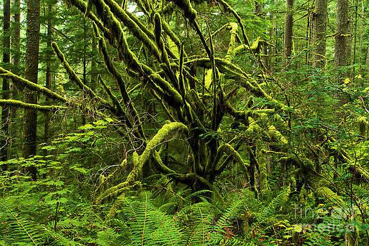 Adam Jewell - Twisted Rain Forest