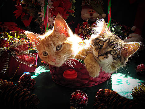 Chantal PhotoPix - Two Cat Heads Are Better Than One - Anxious Christmas Kittens Kitties waiting for their Xmas Present