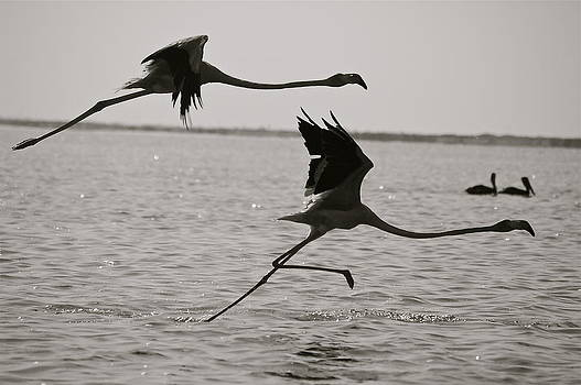 Two Flamingoes by Patricia Kelly