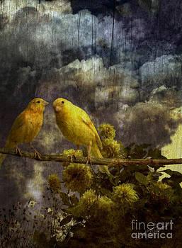 Two friends by Pavlos Vlachos