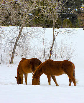 Two Horses by FeVa  Fotos
