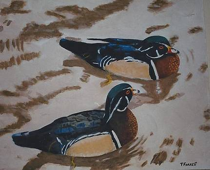 Two Male Mallard Ducks by Terry Forrest