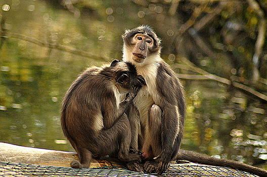 Martina Fagan - Two Monkeys