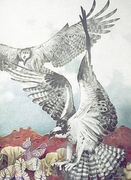 Two Ospreys by Kyra Belan