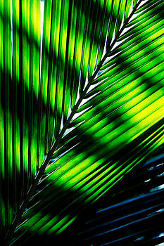 Two palm leaves abstract by Anya Brewley schultheiss