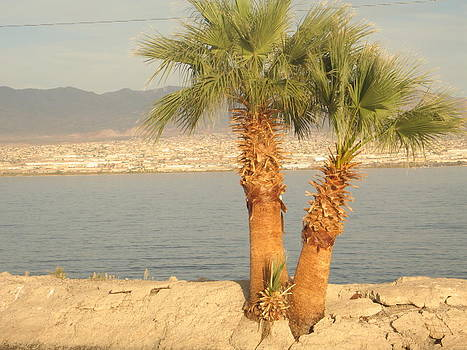 Two Palm Trees By a Lake by Michaline  Bak