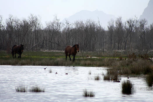 Deborah Hall Barry - Two Wild Horses