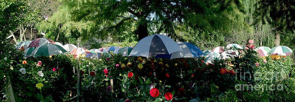 Umbrella Garden by Bernadette Kazmarski