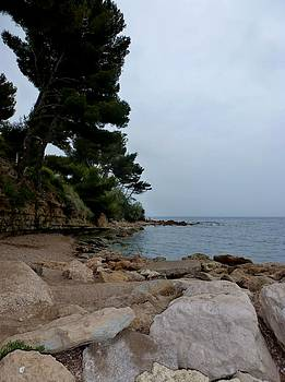 Umbrella Pine on Mediterranean by Christine Burdine