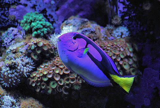 Matthew Winn - Under Da Sea