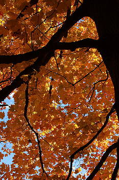 Under the Canopy by Lyle Hatch