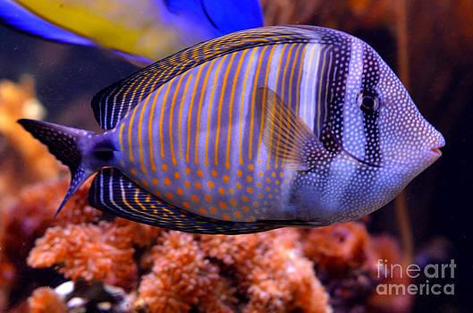 Pravine Chester - Underwater Beauty