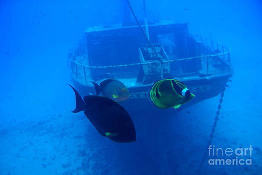 Underwater by Ronald Williamson