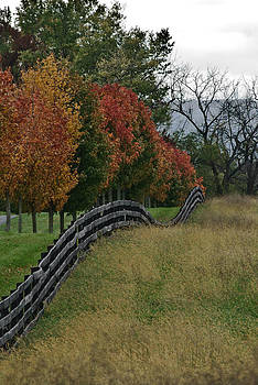 Undulating Fence by Donna Harding