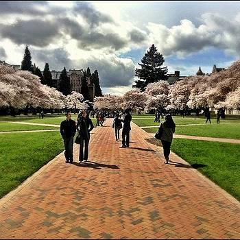 University of Washington by Chris Fabregas