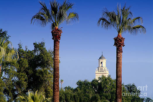 University Palms by David Ricketts