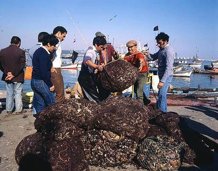 Unloading Mussels In Chilean Seaport by Thomas D McManus