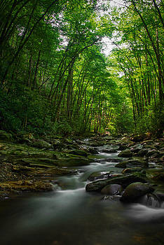 Untouched in the Great Smoky Mountains National Park by Karen Lawson
