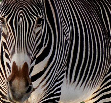 Up Close and Personal by Leigh Meredith