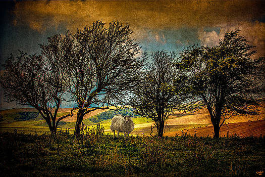 Up On The Sussex Downs In Autumn by Chris Lord