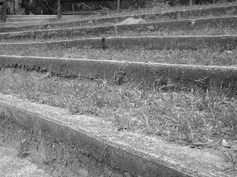 Up or Down Park Steps by LDPhotography Stephanie Armstrong