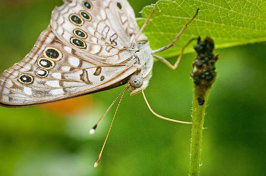Lisa  Spencer - Upclose Moth_1