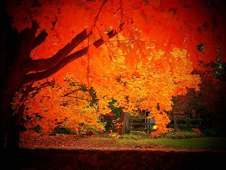 Upperville trees by Joyce Kimble Smith