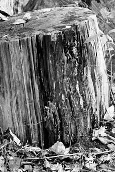 Upright Log by Penny McClintock