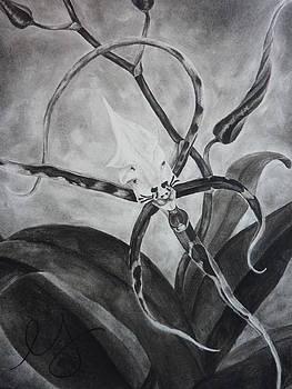 Estephy Sabin Figueroa - Upside-down Orchid