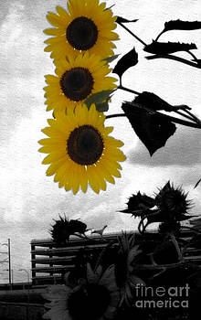 Urban Sunflowers by Selwa Baroody