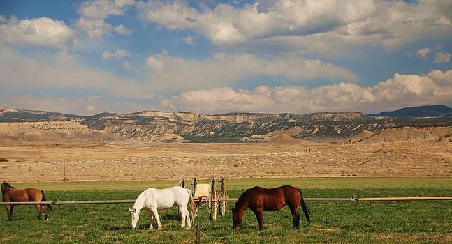 Kathleen Heese - Utah Skys