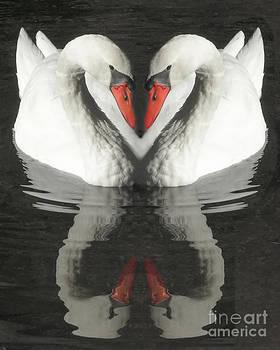 Anne Ferguson - Valentine Swans
