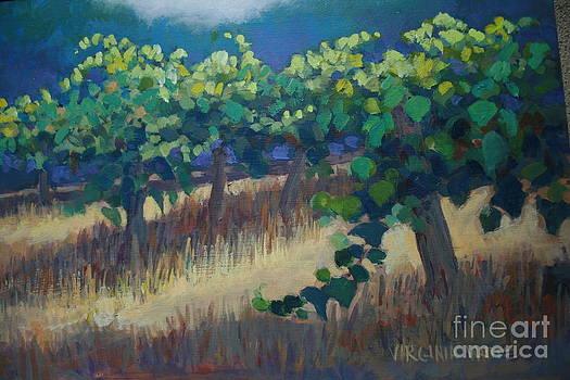 Valley Vineyard by Virginia White