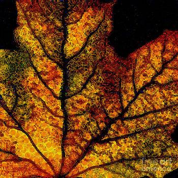 Wingsdomain Art and Photography - Vangogh