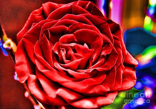 Anne Ferguson - Velvet Rose