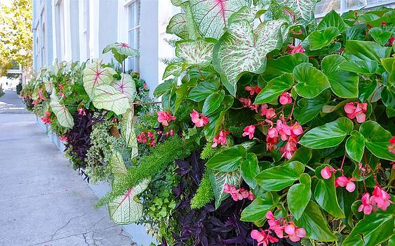 Vendue Street Window Boxes by Lori Kesten
