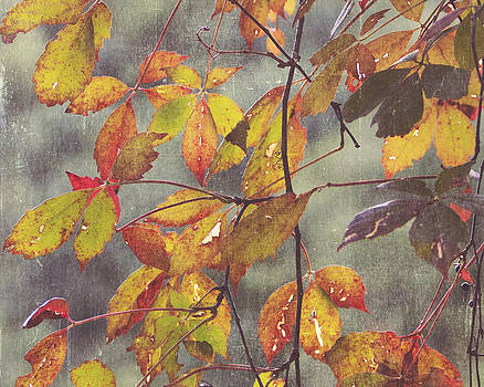 Vibrance  by Robin Blankenship