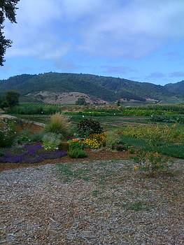 View from napa's French Laundry by Rebecca Hale