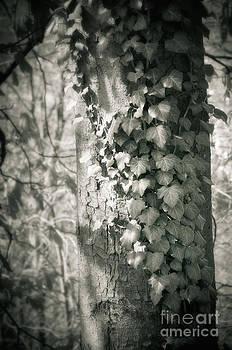 Silvia Ganora - Vine on tree