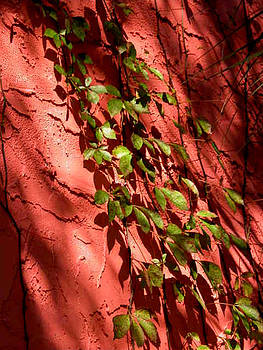 Vines against Red by Barbara Porto