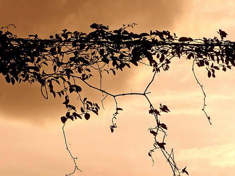 Stuart Brown - Vines And Sky