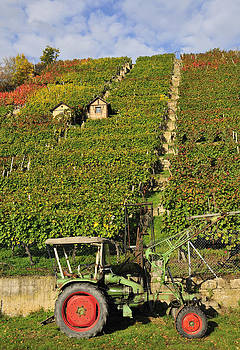 Vineyard with tractor by Matthias Hauser