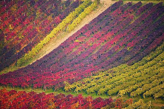 Francesco Riccardo  Iacomino - Vineyards