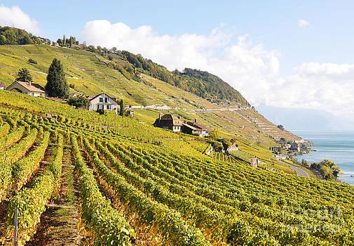 Vineyards in Lavaux Switzerland by Alexander Chaikin