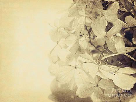 Emily Kelley - Vintage Flowers