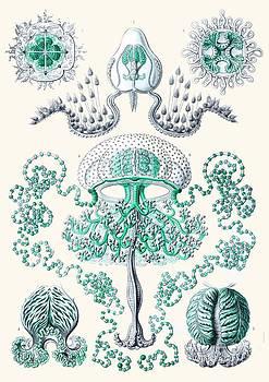 Vintage jellyfish by Patruschka Hetterschij
