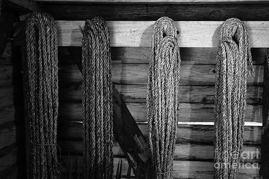 Gaspar Avila - Vintage ropes