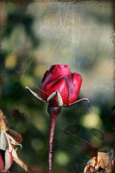 KayeCee Spain - Vintage Winter Rose
